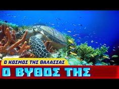 Ο Κόσμος της Θάλασσας - Ο Βυθός της Θάλασσας Summer Activities