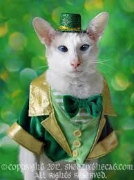 st patrick's day dogs - Google Search