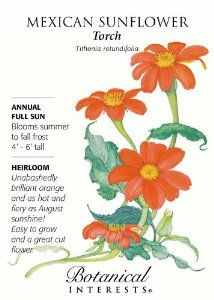 Mexican Sunflower Torch Seeds - 500 mg - Annual by Botanical Interests. $1.89. Blooms Late Summer to Fall. Annual. 500 mg of seed. Full Sun. Mature Height: 5'. Unabashedly brilliant orange 3 wide daisy-like flowers on long stems. The 'Torch' flowers are as hot & fiery as the August sunshine! A genuine heat-lover, this Mexican Sunflower sets the dog days of summer ablaze with its sizzling orange daisies. A large outstanding plant for the back of the border. Plant a row of ...
