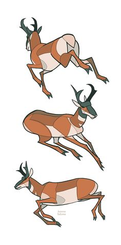Studies - Pronghorn by oxboxer.deviantart.com on @deviantART ✤ || CHARACTER DESIGN REFERENCES | キャラクターデザイン || ✤