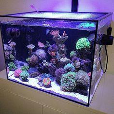 Absolutely Love this Reef Tank! From @seriousam #reefaquarium #fishtank…