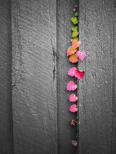 leaves,,,color splash,,,