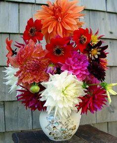 Florist Wilmington NC | Bloomers Flowers Blog - Wilmington NC | BloomersBlog: Darling Dahlias