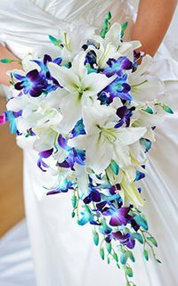 Want a fun tropical look and it still be close to traditional? Or looking for beautiful white and blue mixed bouquet? Look no further this is LOVELY absolutely LOVELY! White oriental lilies, with blue orchids in a cascade bouquet! We can do this for you, give us a call H&J Florist and Greenhouses in St Joseph MI 269-429-3621