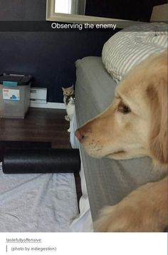 Observing the enemy. #imgur | Follow us for more fun pet videos and photos @gwylio0148