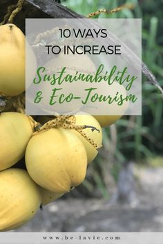 in which to increase sustainability and eco tourism when travelling globally and reduce-carbon emissions to preserve the planet. Slow Travel, Travel Tips, Animal Experiences, Responsible Travel, Sustainable Tourism, Weird Food, Carbon Footprint, Natural Living, Holiday Destinations