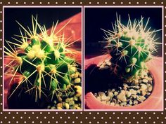 My beautiful #Cactus