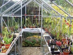 Carnivorous plants and greenhouses                                                                                                                                                                                 More
