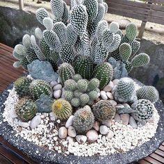 15 inspirations of cactus arrangements that will make your home beautiful and gr. - Deko mit Suculentas - Home Mini Cactus Garden, Cactus House Plants, Cactus Terrarium, Succulent Gardening, Cactus Flower, Container Gardening, Green Cactus, Cactus Cactus, Cactus Decor