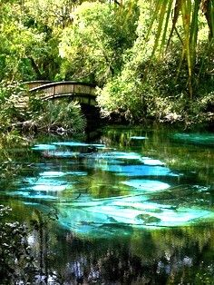 Fern Hammock Springs, south of Gainesville, Florida, in the Ocala National Forest.  There are hundreds of named, beautiful, clear, fresh water springs in North-Central Florida, The Heart of Florida.  http://www.GainesvilleFloridaHomes.com