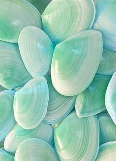Imagen de pink, shell, and wallpaper Mint Green Aesthetic, Aesthetic Colors, Aesthetic Collage, Aesthetic Pictures, Color Menta, Mint Color, Mint Blue, Aqua, Aesthetic Backgrounds