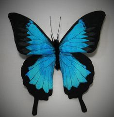 Fabric sculpture   Papilio ulysses Butterfly fiber by YumiOkita