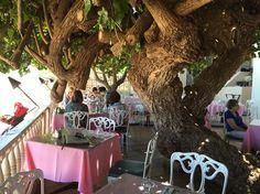 Hau Tree under which Robert Louis Stevenson wrote along Waikiki Beach, Hawaii. Robert Louis Stevenson, Waikiki Beach, Embedded Image Permalink, Joseph, Hawaii, World, The World, Earth