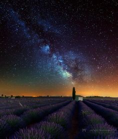 The Lavender Palette | Shutterbug