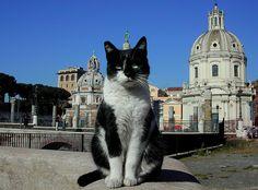 straycatspotter:Cat in Roma