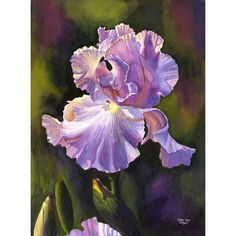 Purple Iris Art Watercolor Painting Print by Cathy Hillegas, 11x14,... (915 MXN) ❤ liked on Polyvore featuring home, home decor, wall art, water color painting, blue painting, blue home decor, green painting and watercolor painting
