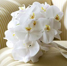 white orchid wedding flower bouquet, bridal bouquet, wedding flowers, add pic source on comment and we will update it. www.myfloweraffair.com can create this beautiful wedding flower look.