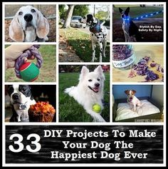 **33 DIY Projects To Make Your Dog The Happiest Dog Ever