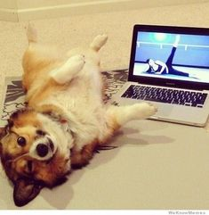 This corgi stretching.   32 Animals Who Think They're People