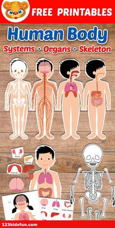 Human Body Systems for Kids Free Printables - Homeschooling Human Body Science, Human Body Activities, Free Activities For Kids, Human Body Unit, Learning Games For Kids, Human Body Systems, Preschool Learning Activities, Homeschool Kindergarten, Science For Kids