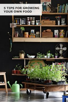 Put your green fingers to work this summer and enjoy healthy food picked fresh from your garden or windowsill! Inspired to start? Try these five IKEA ideas for growing your own food. Photography by Christina Bull. Styling by Ashlyn Gibson.