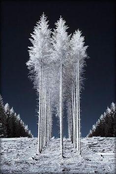 B&w Tumblr, Wow Photo, Infrared Photography, Winter Magic, Winter Snow, Winter Scenery, Tree Forest, Tree Tree, Foto Art