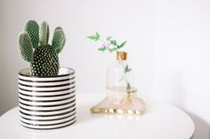 How To Care For Your House Plants.
