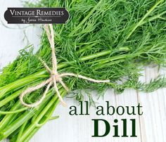 Dill (Anethum graveolens)  Dill has a long rich tradition as both a culinary and a medicinal herb. It was mentioned in the Bible, was common during the Greek and Roman times, and was revered by ancient herbalists such as Hippo ...