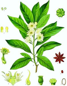 An autodidactic approach to growing a classic medicinal herb garden.