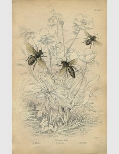 Botanic Bleu: Bee Sunspace