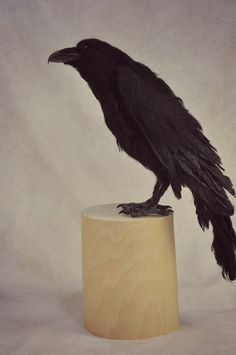 Needle Felted Raven Its So Weird There Is No Single Day In Which