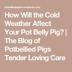 How Will the Cold Weather Affect Your Pot Belly Pig? | The Blog of Potbellied Pigs Tender Loving Care