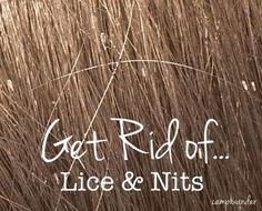 just in case: Camp Wander: Get Rid of Lice and Nits Naturally! Doterra Essential Oils, Essential Oil Blends, Doterra Blends, Lice Nits, Natural Home Remedies, Tea Tree Oil, Just In Case, Essentials, 5 Kids