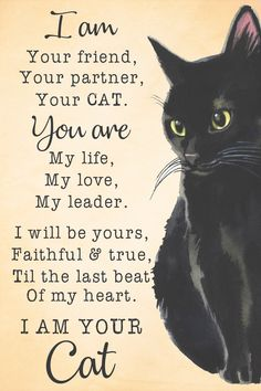 Witch Craft Black cat: I am your best friend, your partener Source by best friends Beautiful Cats, Animals Beautiful, Cute Animals, Crazy Cat Lady, Crazy Cats, I Love Cats, Cool Cats, Black Cat Art, Cute Black Cats