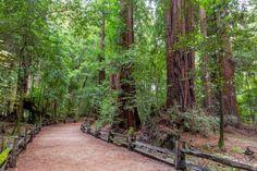 Put Your Best Foot Forward:  Santa Cruz County's Top 5 Hikes Photo courtesy of Garrick Ramirez