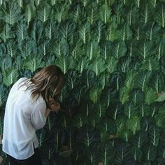 Kinfolk's art director creating a wall of collard greens for the back cover of their cookbook - creative and inspiring and of course gorgeous too!!