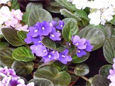 World, Plants, Html, African Violet, Tree Stumps, Gardens, Party, Watering Plants, Native Plants