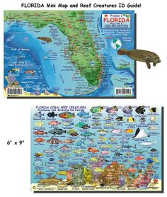 Florida Reefs And Wrecks Map.40 Best Florida Coral Reefs Images Coral Reefs Diving Florida Keys