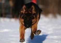 Nero running full speed