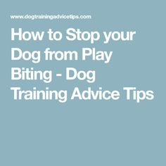 How to Stop your Dog from Play Biting - Dog Training Advice Tips