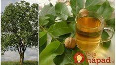Čaj z orechových listov vám zmení život: 21 liečivých účinkov, ktoré by mal poznať úplne každý! Russian Recipes, Korn, Stevia, Vodka, Remedies, Food And Drink, Homemade, Drinks, Tableware