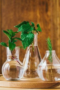 Want to grow herbs on a budget? Plants like peppermint, lemon balm and nettles can generate new growth from just their stems. Learn how to make plant cuttings in the newest article of our Plant Power Journal.