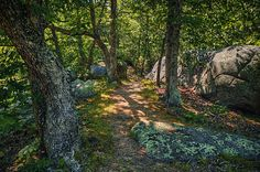 'Sunlit Path' ~ Elephant Rocks State Park