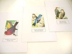 CHESTER REED POSTCARD / $2 -- bird species