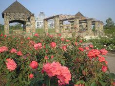 The ceremony location - Rose Garden at Lewis Ginter Botanical Garden