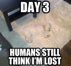 Day 3...Humans still think I'm lost