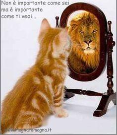 #cats#lions non è importante come sei ma come ti vedi tu