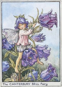 Illustration for the Canterbury Bell Fairy from Flower Fairies of the Garden. A young boy fairy sits in a canterbury bell plant, ringing one of the flower bells.  										   																										Author / Illustrator  								Cicely Mary Barker