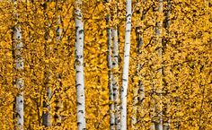 Autumn, Photos, Tree Structure, Pictures, Fall Season, Fall