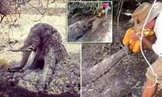 Whole village saves terrified elephant trapped in a well overnight